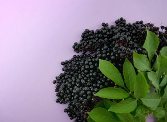 Get Fit Work Force Elderberry